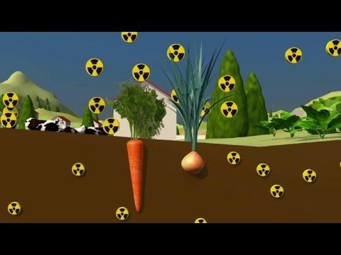 La contamination radioactive