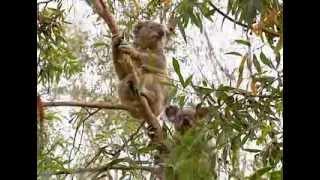 Untamed Australia episode 1 (Documentary)