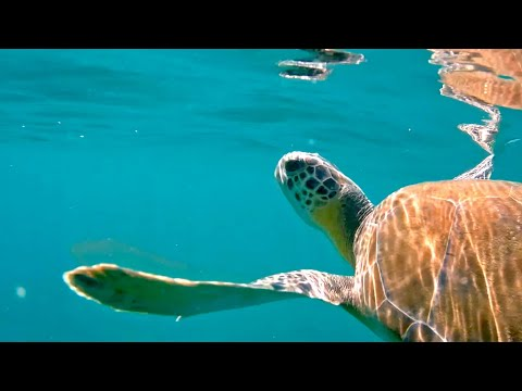 Green Turtle Rescuers - Texas Parks & Wildlife [Official]