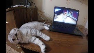 😻КОШКА Мешает Работать на Компьютере 🐱Видео про Котенка