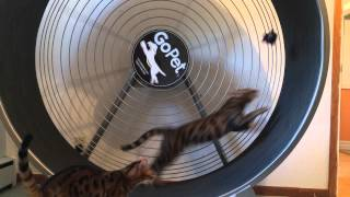 Cat Tread Wheel