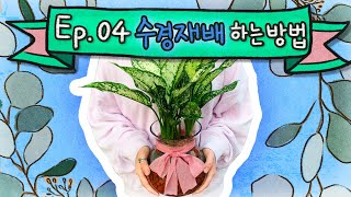 [ PM꽃집 ] Ep.04 수경재배 하는 방법