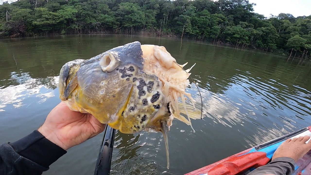 VI TUDO E NÃO PUDE FAZER NADA, ESSE ANIMAL NÃO PERDOA NADA. Pescaria.