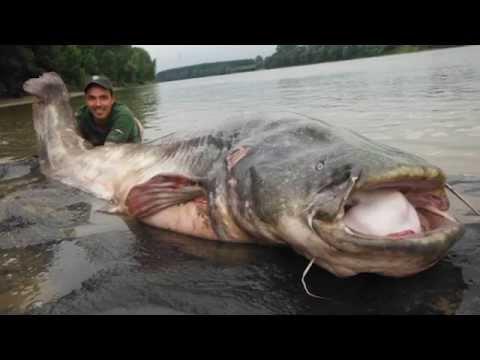 15. Rybaření s Chyť a pusť - Jak na sumce