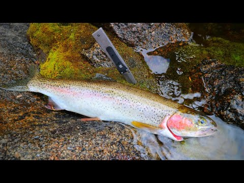 Wild Mountain Trout Catch N' Cook
