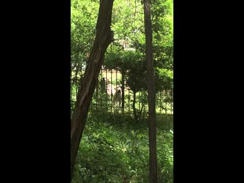 barking-dogs-april-20,-2014