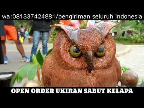 Bonsai Kelapa Owl Burung Hantu Terima Pesanan Youtube