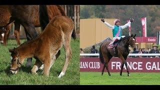 Enable | A product of Juddmonte Farms