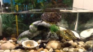 Piccolo acquario Trachemys parte 2