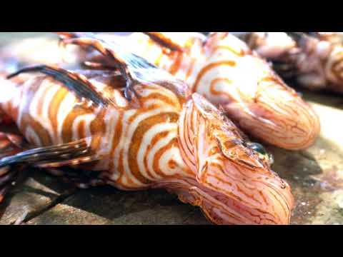 Help Save The Belize Reef From The Invasive Lionfish!