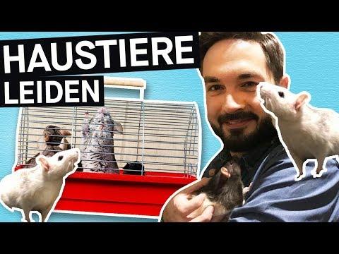 Haustiere in Gefahr: Käfige viel zu klein? So leiden eure Hamster! || PULS Reportage
