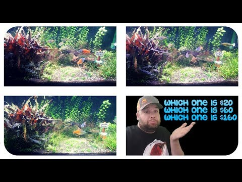 LED LIGHT COMPARISON: Finnex, Fluval, Aquaneat - New Plants - A Day In The Fishroom