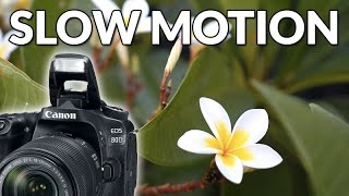 Canon 80D Review- Slow Motion - Sample Video Footage Test (60fps)