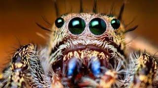 Самые опасные пауки нашей планеты! Топ самых ядовитых пауков на земле