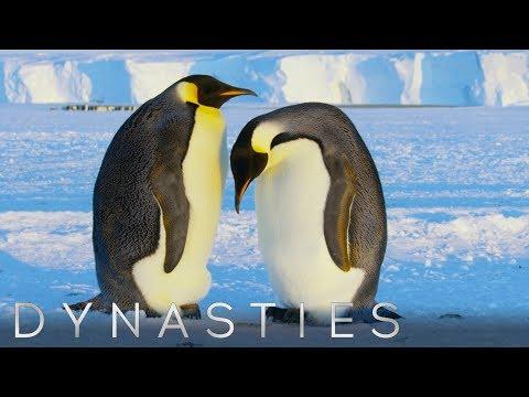 Best of Penguins