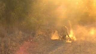 Sunset Impala Fight