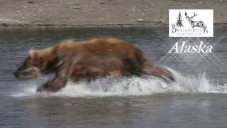 BrushBuck Alaska: Ocean Wildlife To Interior Wilderness Adventure