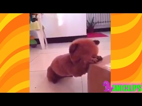 Funny Dog Plays Hide and Seek with Owner