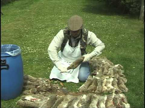 Rabbit hunting tips for Gutting And Skinning Rabbits. Shooting.