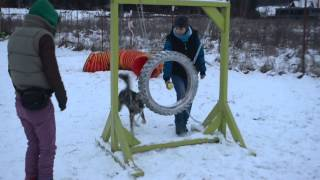 Agility Training For Napoca Dog Show 2015