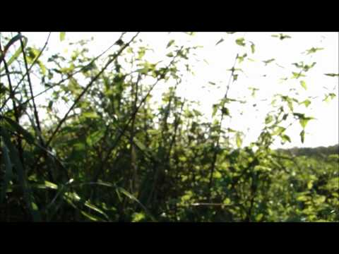 September Malevolence - Absence