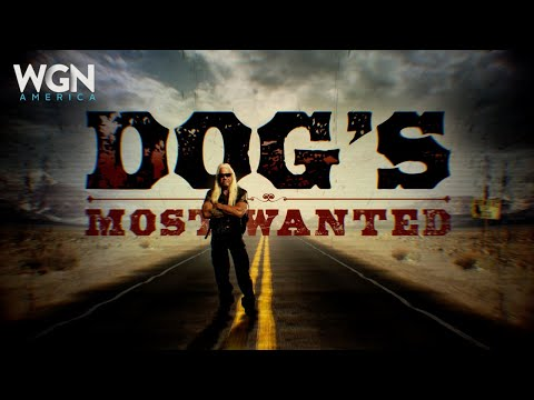 dog's-most-wanted-|-main-title-|-wgn-america