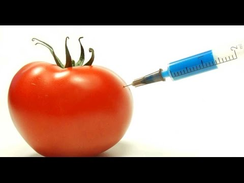What Does Science REALLY Say About GMO Food?