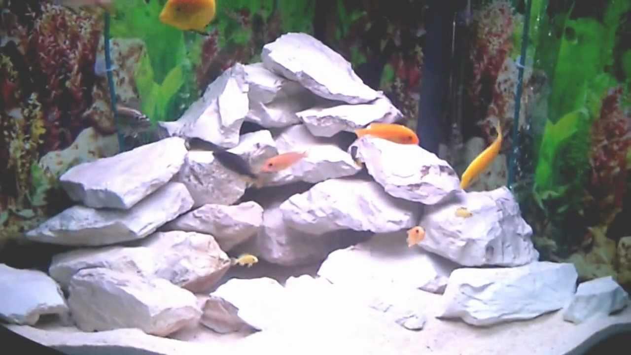 Aquarium fish tank in south africa - Lake Malawi South African Cichlid Fluval Venezia Corner Aquarium Fish Tank