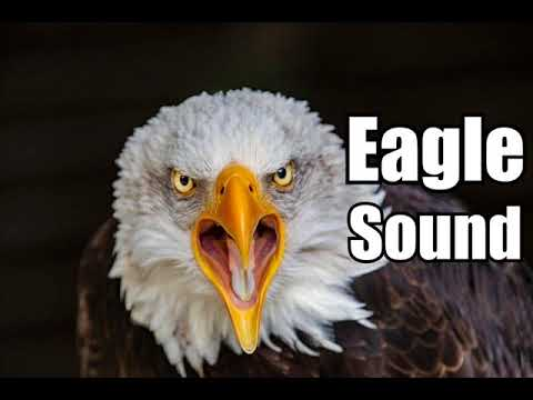 10 minutes eagle sound effects different eagle sounds high quality youtube. Black Bedroom Furniture Sets. Home Design Ideas