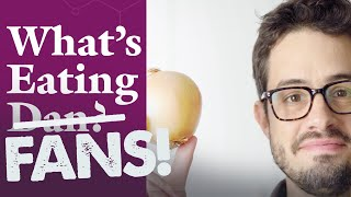 What's Eating FANS: Dan Responds to Your Onion Questions
