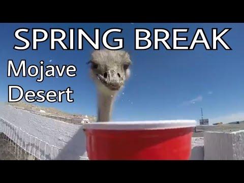 MOJAVE DESERT - California Road Trip 1