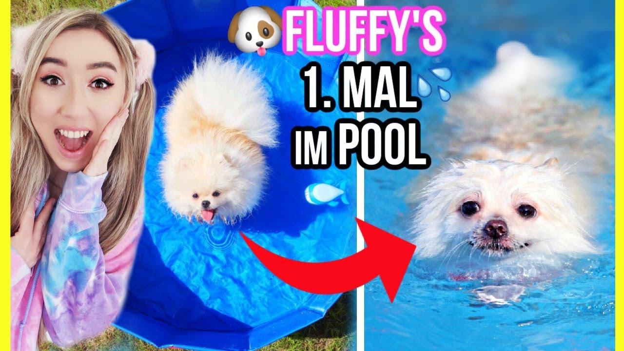 FLUFFY WELPE geht in POOL schwimmen & planschen das 1. MAL im SOMMER (einfach Süß)
