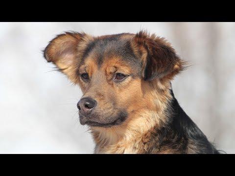 Professional Dog Training Instruction Lexington Kentucky - Sample Session