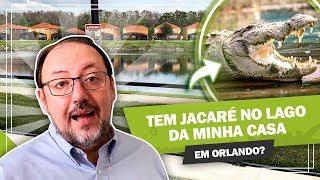 TEM JACARÉ NO LAGO DA MINHA CASA EM ORLANDO!?