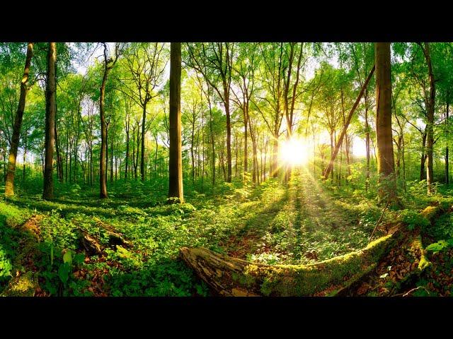Morning Meditation Music | 432 Hz Positive Energy | Healing Zen Music | Deep Chakra Healing