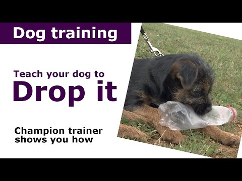 How to teach a dog to drop it | Expert puppy training advice