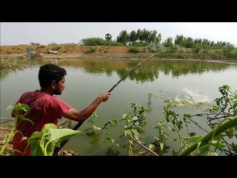 Fish Hunting||Fishing||Rohu Fish And Grass Carp Fish Catch