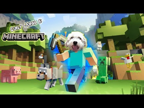 Curly Juega a: Minecraft
