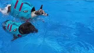 강아지 수영장가다