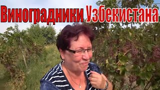 #Узбекистан  #БУХАРА часть 1