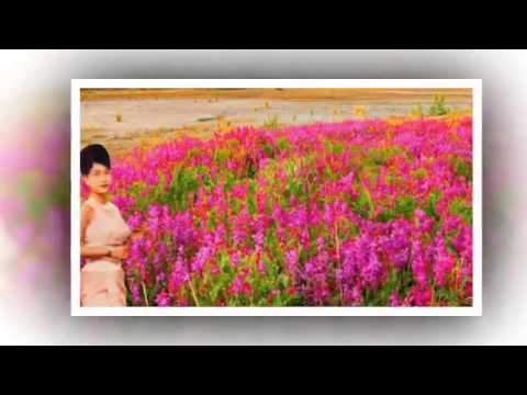 Ros sereysothea   Thoek Chruos Our Yada   Khmer Old Song   Cambodia Music MP3  2015 music mp3