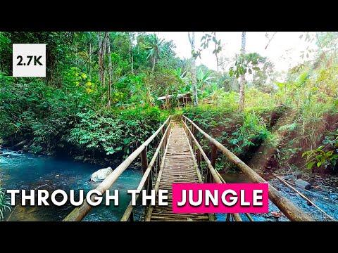 Jungle Virtual Tour Walk In Bali Indonesia Rainforest【4K 60fps】GoPro Hero8 Walk Through