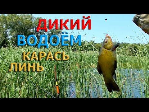 Рыбалка на поплавок.ЛИНЬ,КАРАСЬ...