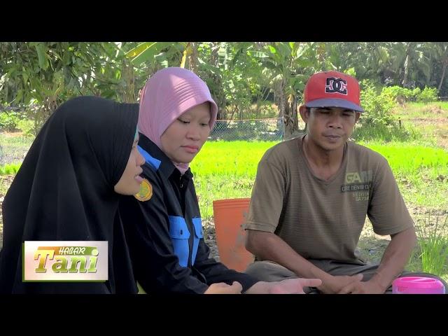 Habar Tani Episode 4  - Penggunaan Pestisida Alami Segmen 2 #TV Tabalong