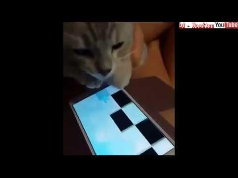 LẠC TRÔI - PIANO VERSION (Cats playing)