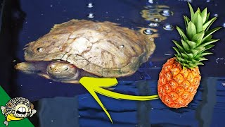 Video Outdoor Turtle Pond download MP3, 3GP, MP4, WEBM, AVI, FLV Agustus 2018