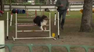 Video: 7th Annual Dog Agility Trial In Murrells Inlet