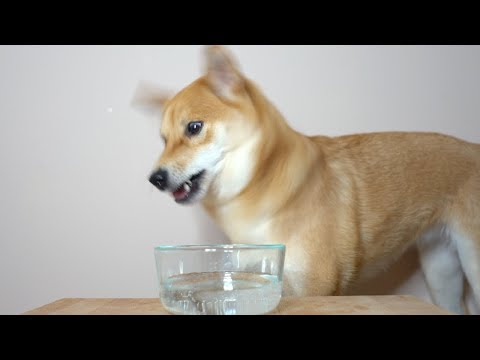 What Happens when Dog drinks Seltzer Water..?
