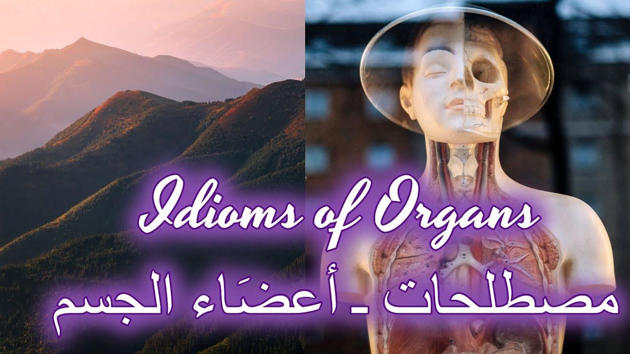 Idioms of organs-  أهم 4 مصطلحات (من أعضاء الجسم) إنجليزيّة من اللغة اليومية