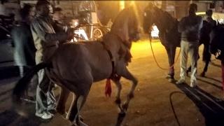 घोड़े का जबरदस्त डांस |Horse Dance | DJ Wala Dance with Horse | हॉर्स डांस